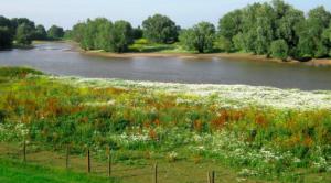 Wetland Passwaay Tiel